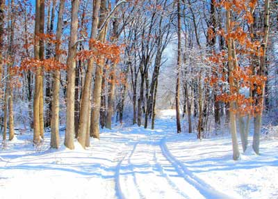 Snow Trail Through Woods, photo by Melissa Snell
